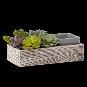 Scentsy Succulent Warmer Grey